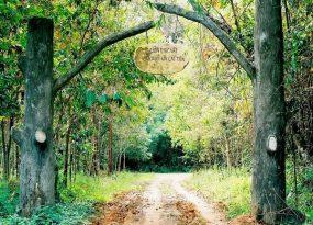 Trải nghiệm ở vườn quốc gia Cát Tiên