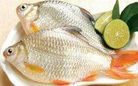 5 món ăn từ cá giúp quý ông lấy lại 'đỉnh cao phong độ'