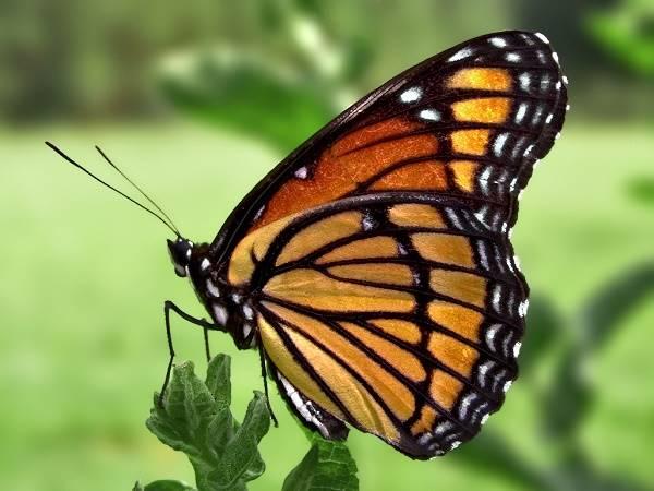 Nằm mơ thấy bươm bướm đánh con gì chắc ăn nhất?