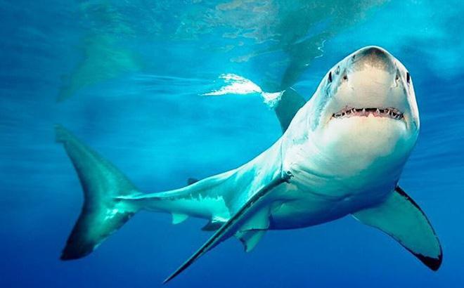 Trong giấc mơ thấy cá mập là điềm báo gì?