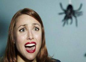 Gặp nhện là điềm báo gì và nên đánh loto con nào